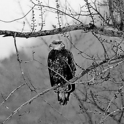 photo by Stefan Hard of eagle