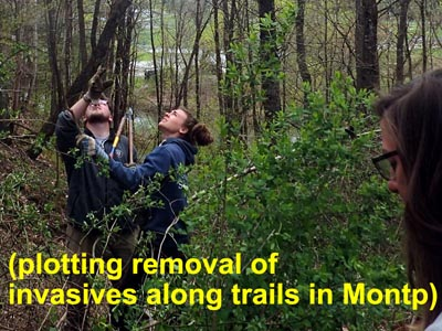 NCCC removes invasive plants