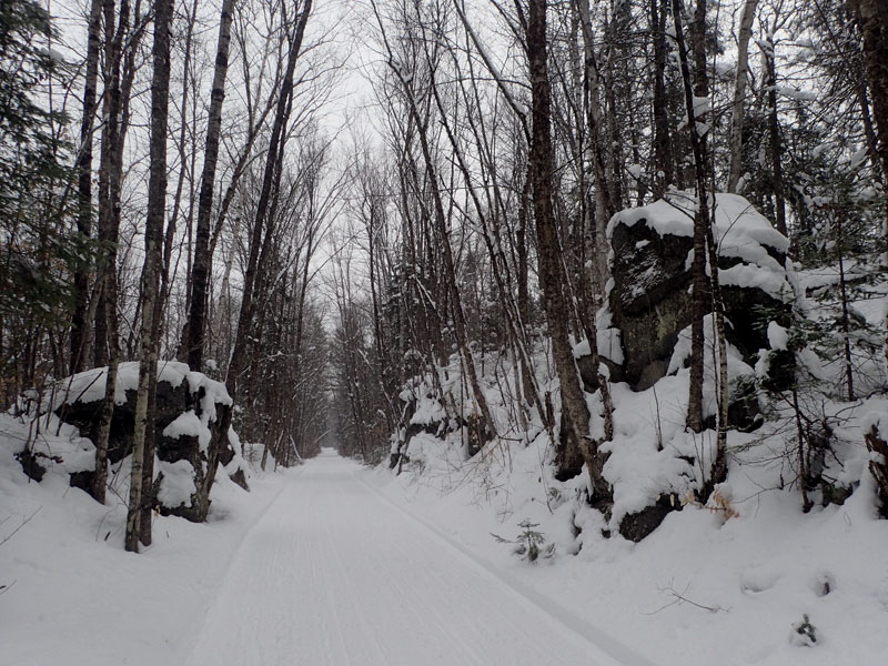 maple sugar lines and trail