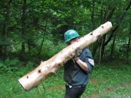 cedar log carried by volunteer